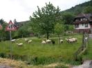 radsportwoche2008_022
